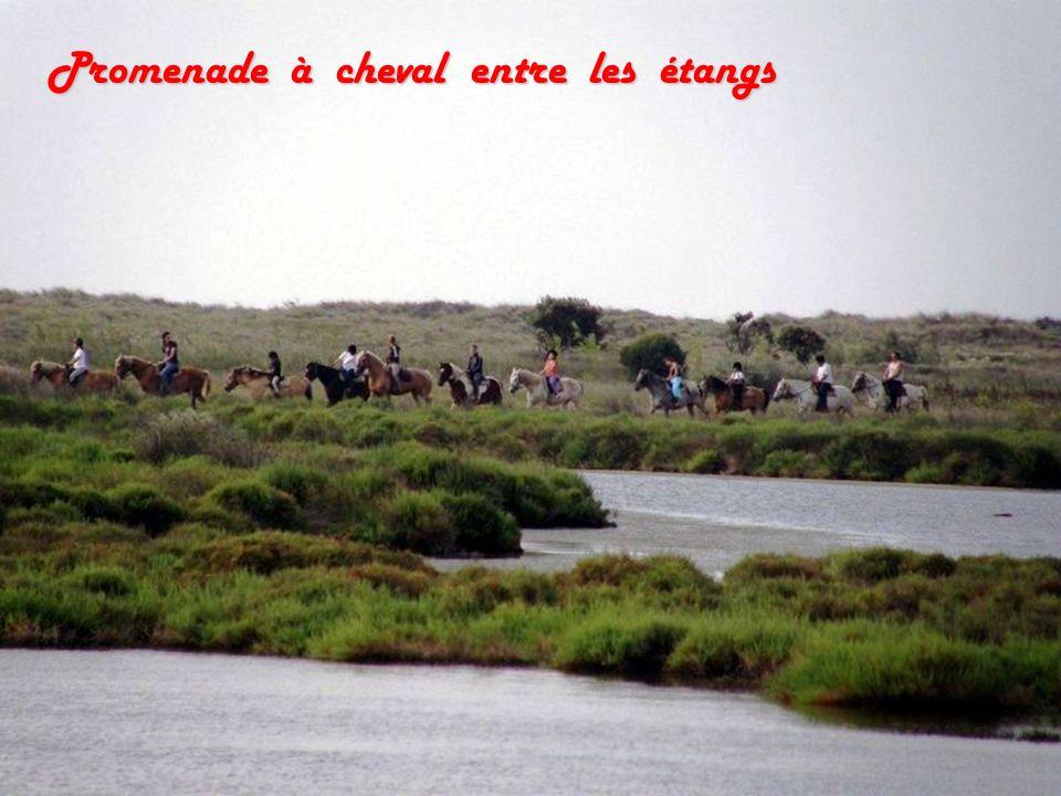 Promenade à cheval entre les étangs