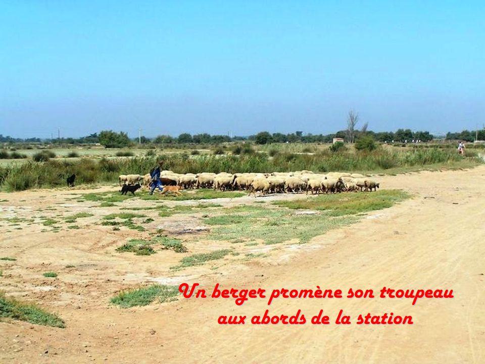Un berger promène son troupeau aux abords de la station