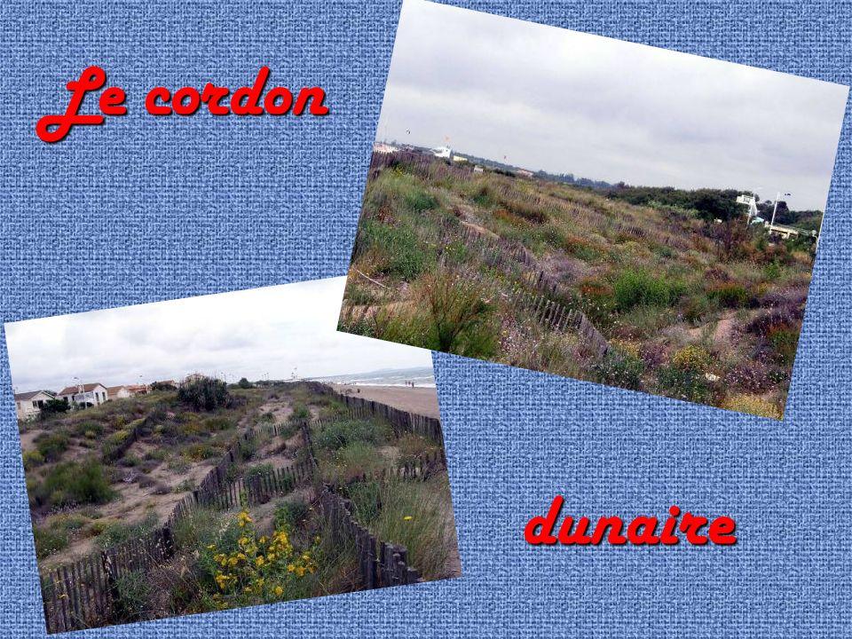 Le cordon dunaire