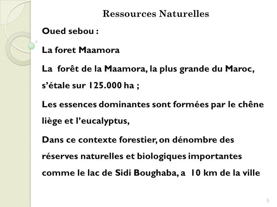 Oued sebou : La foret Maamora La forêt de la Maamora, la plus grande du Maroc, sétale sur 125.000 ha ; Les essences dominantes sont formées par le chê