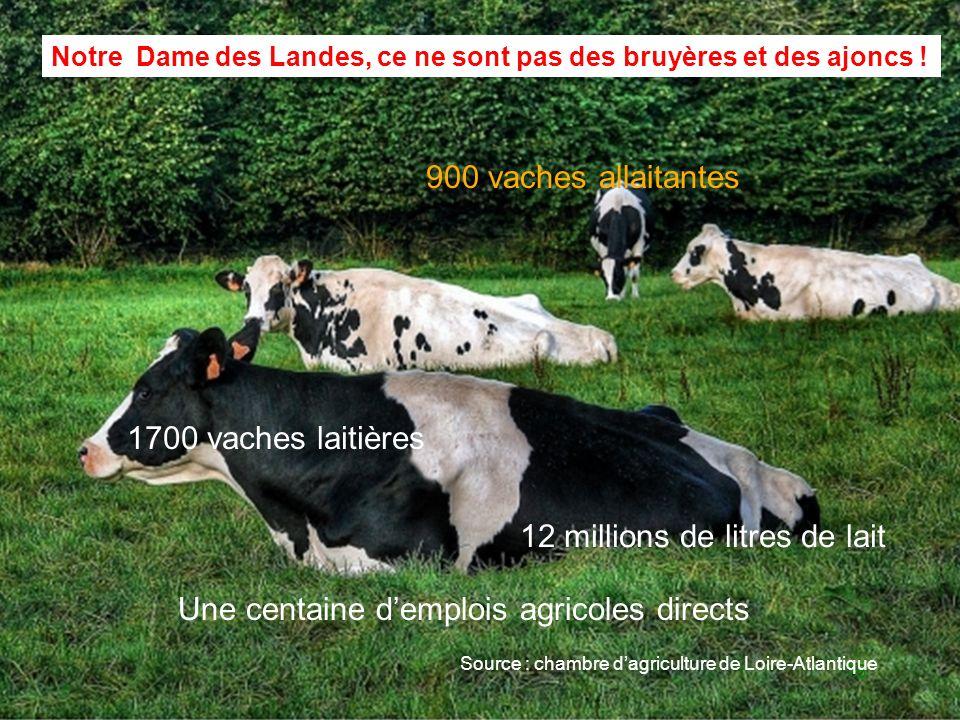 16 Notre Dame des Landes, ce ne sont pas des bruyères et des ajoncs ! 12 millions de litres de lait 900 vaches allaitantes Source : chambre dagricultu