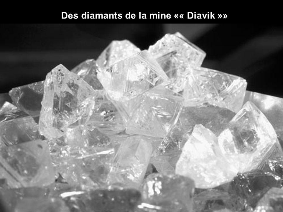 Cette photo représente la quantité de diamants extraite chaque jour dans la mine Diavik (environ 2,5 kilogrammes). Pour y extraire ces diamants, 15 00