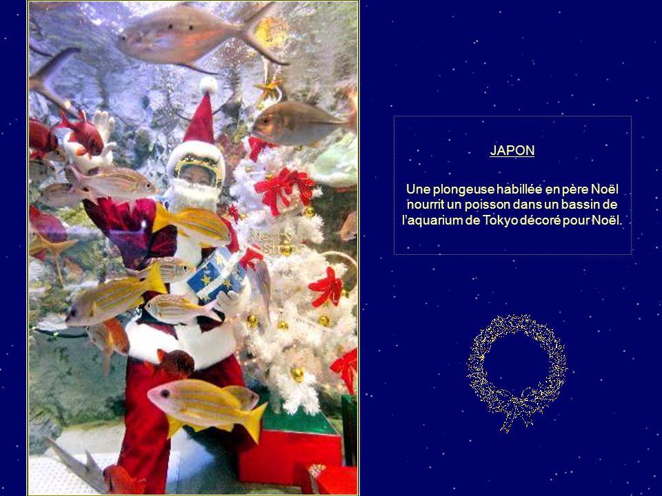 ITALIE Un sapin de Noël de 20 mètres provenant des alpes italiennes illuminé devant de Colisée de Rome.
