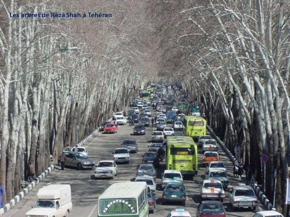 Les arbres de Reza Shah à Tehéran