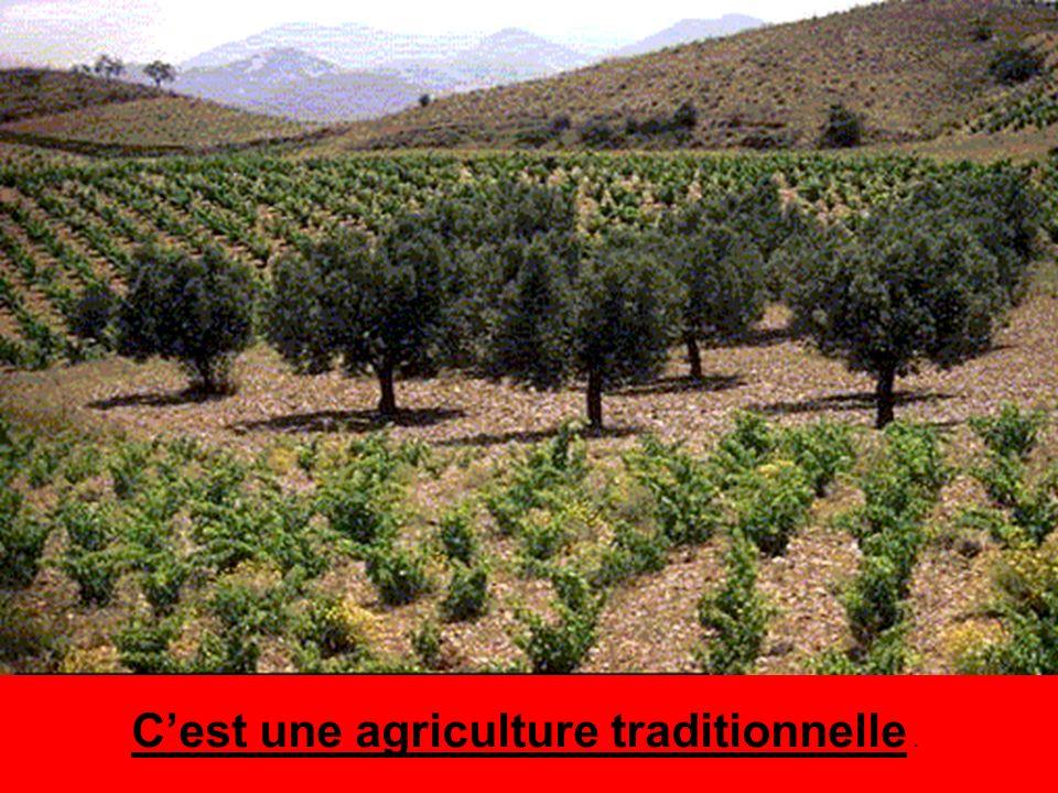 Cest une agriculture traditionnelle.