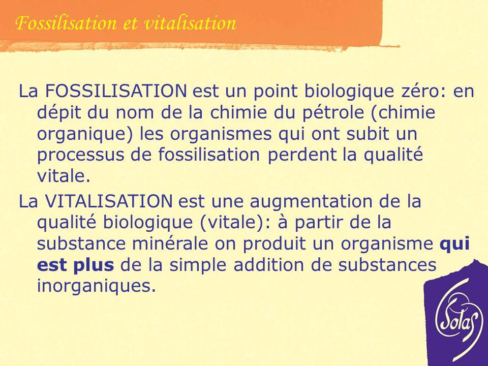 Fossilizzazione e vitalizzazione. Processualità