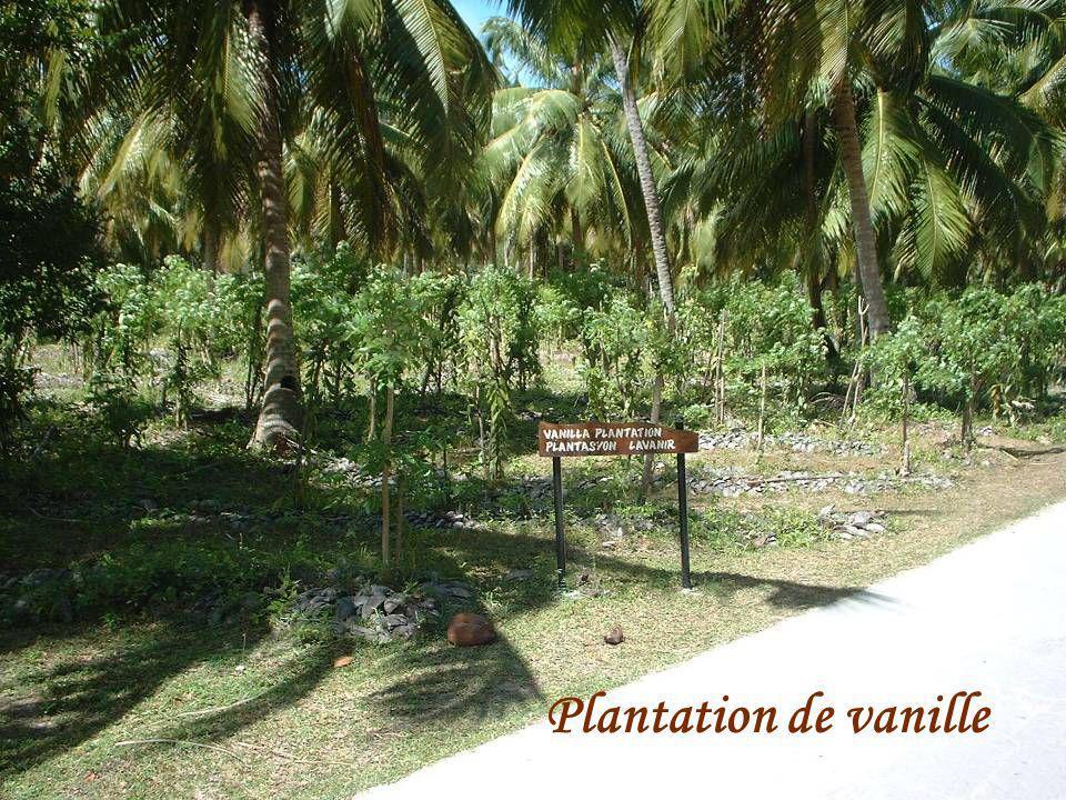 Mangrove à Cousin