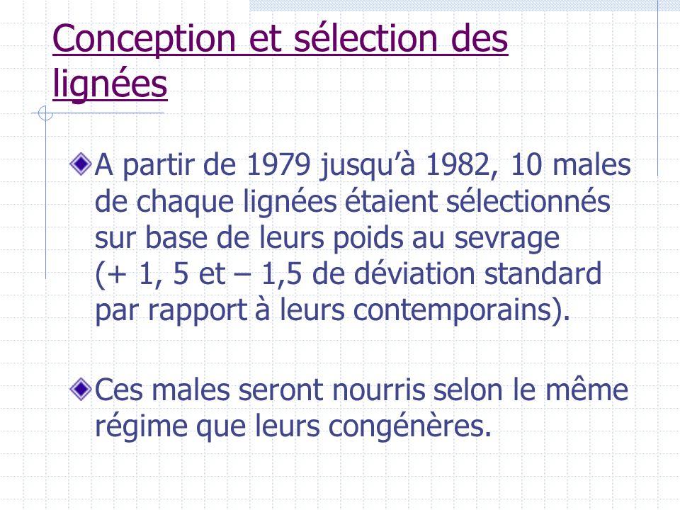 Conception et sélection des lignées A partir de 1979 jusquà 1982, 10 males de chaque lignées étaient sélectionnés sur base de leurs poids au sevrage (