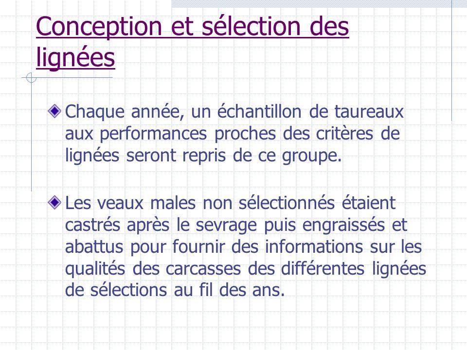 Conception et sélection des lignées Chaque année, un échantillon de taureaux aux performances proches des critères de lignées seront repris de ce grou