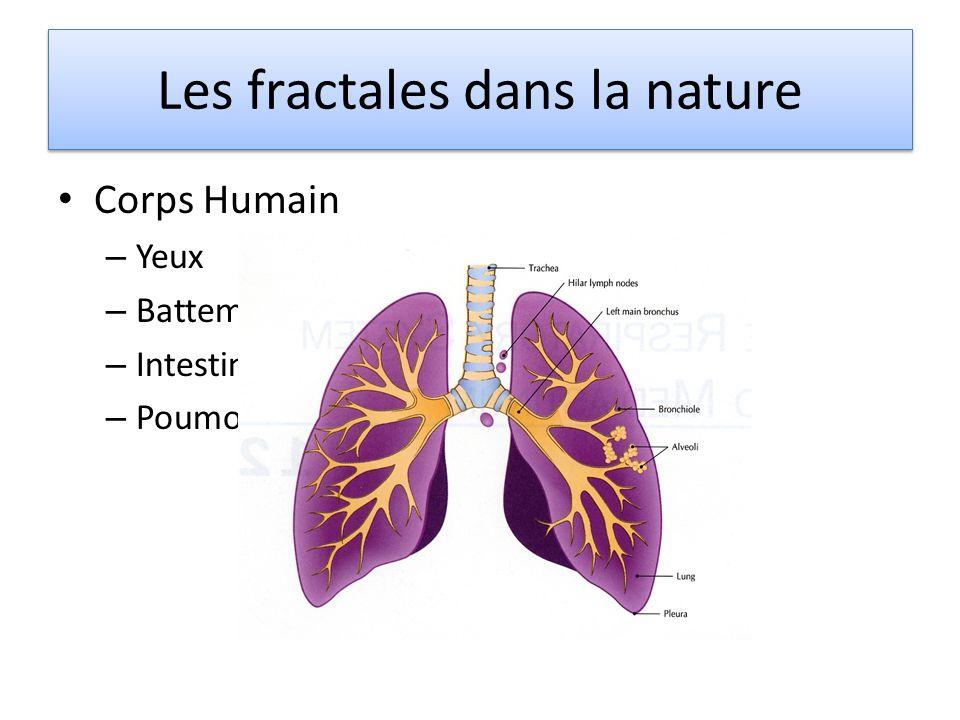 Corps Humain – Yeux – Battements du cœur – Intestins – Poumons Les fractales dans la nature