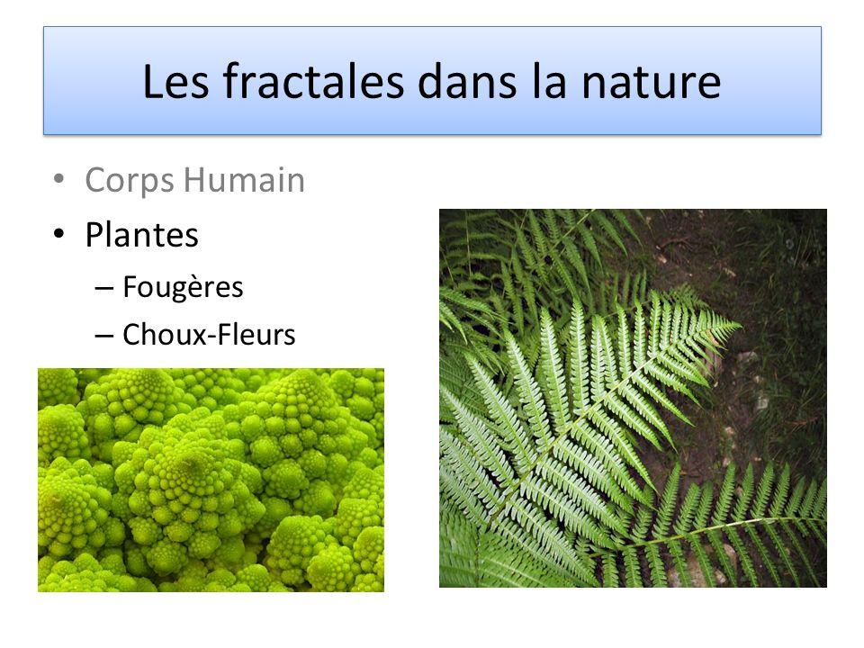 Corps Humain Plantes – Fougères – Choux-Fleurs Les fractales dans la nature