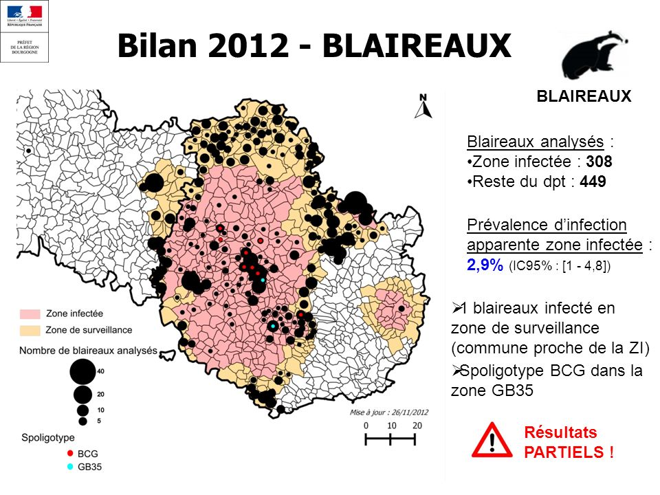 Bilan 2012 - BLAIREAUX BLAIREAUX Blaireaux analysés : Zone infectée : 308 Reste du dpt : 449 Prévalence dinfection apparente zone infectée : 2,9% (IC9