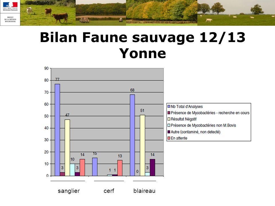 Bilan Faune sauvage 12/13 Yonne sangliercerfblaireau