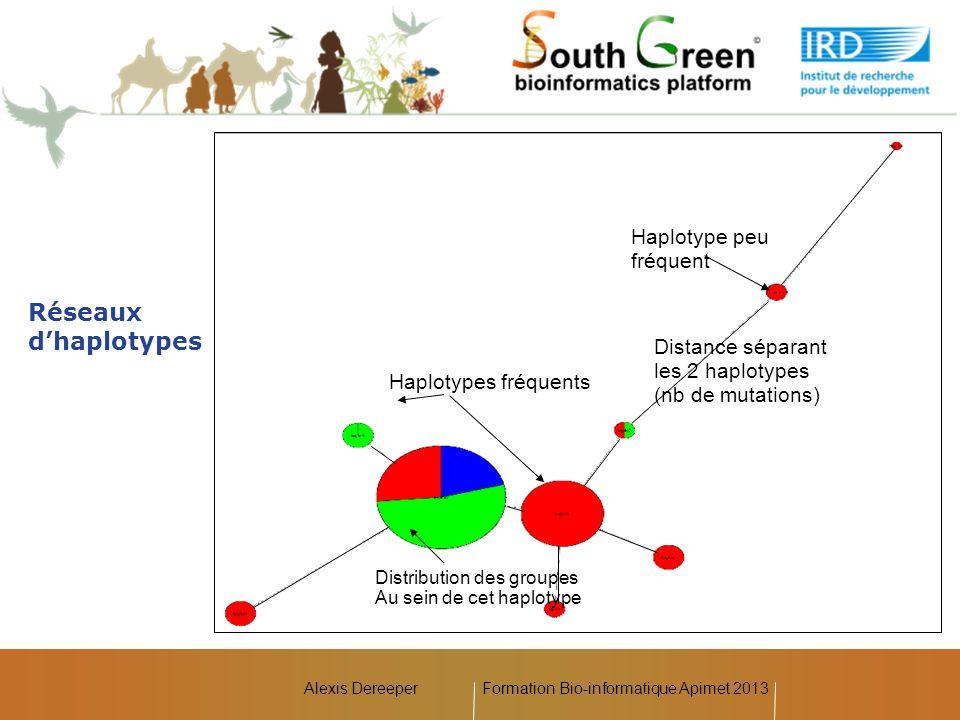 Alexis Dereeper Réseaux dhaplotypes Haplotypes fréquents Haplotype peu fréquent Distribution des groupes Au sein de cet haplotype Distance séparant le