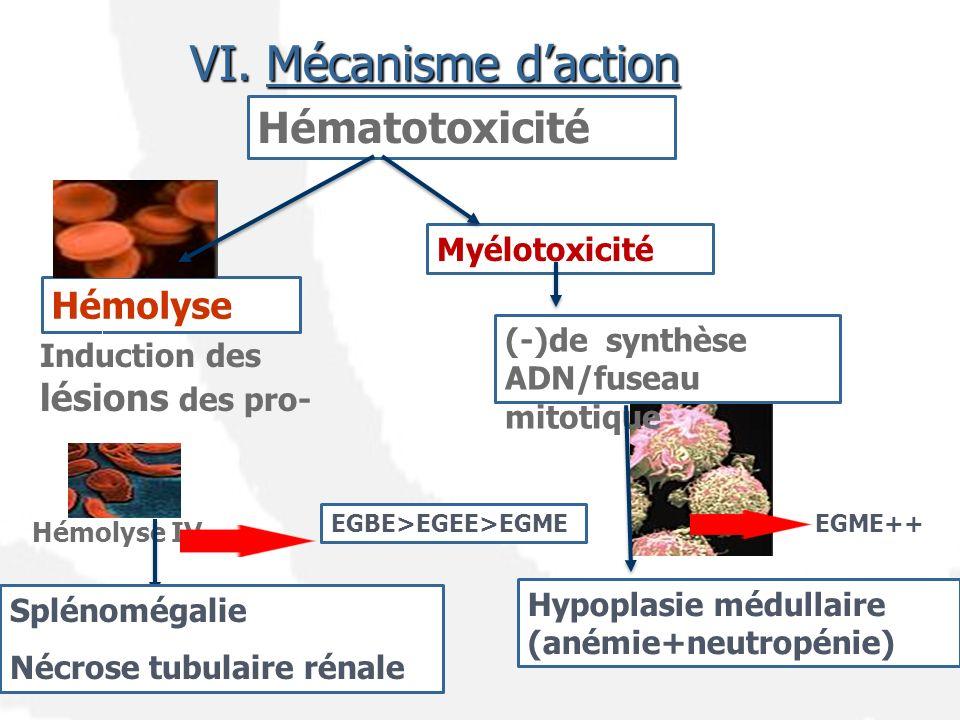 Hématotoxicité Hémolyse Induction des lésions des pro- Hémolyse IV Splénomégalie Nécrose tubulaire rénale EGBE>EGEE>EGME Myélotoxicité (-)de synthèse