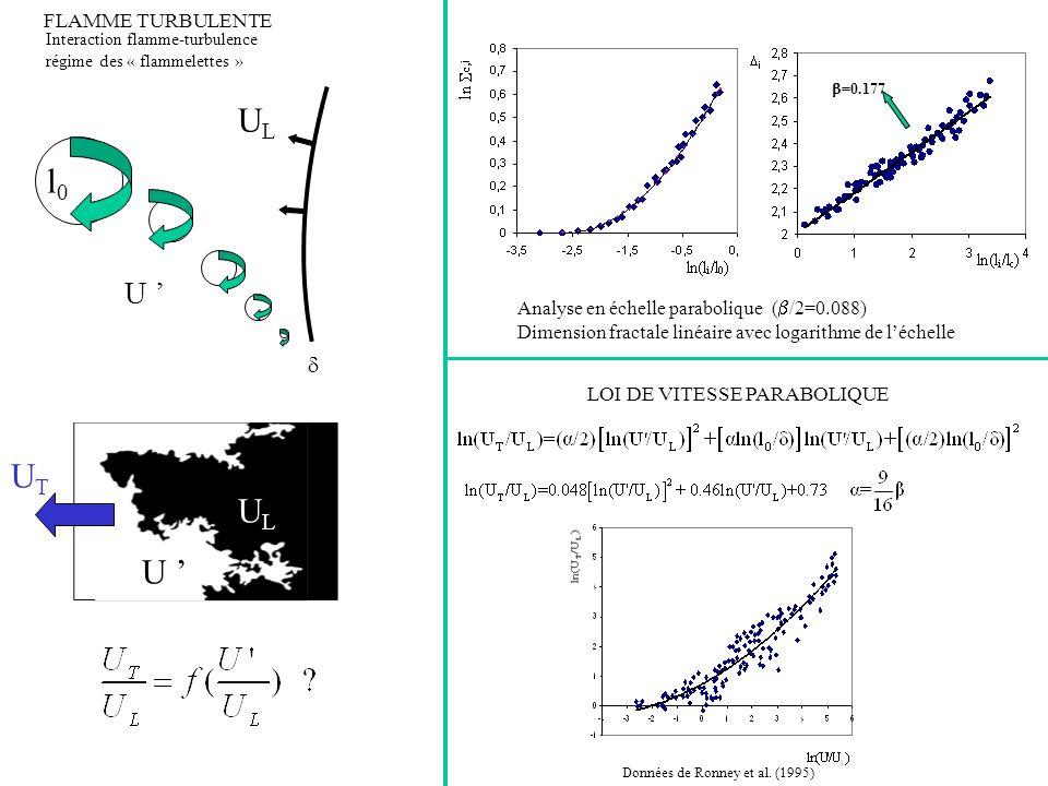 Taille du champ (Mb) vs rang du champ, distribution « fractale parabolique » J.