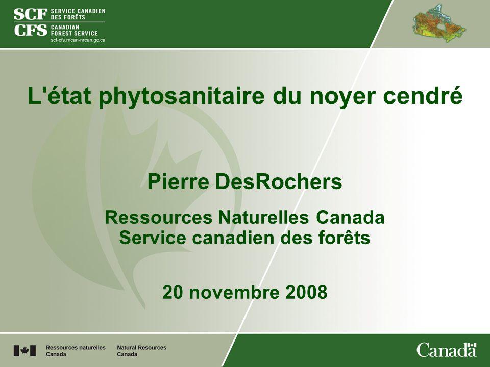 L'état phytosanitaire du noyer cendré Pierre DesRochers Ressources Naturelles Canada Service canadien des forêts 20 novembre 2008