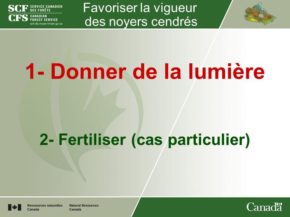 Favoriser la vigueur des noyers cendrés 1- Donner de la lumière 2- Fertiliser (cas particulier)