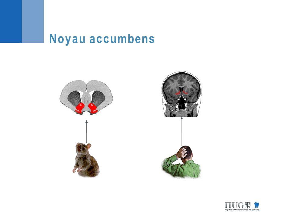 Activation noyau accumbens Douleur Jensen et al., 2003
