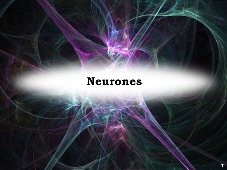 Neurones T