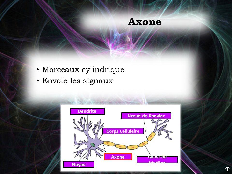 Axone Morceaux cylindrique Envoie les signaux Dendrite Corps Cellulaire Noyau Axone Gaine de Myéline Nœud de Ranvier T