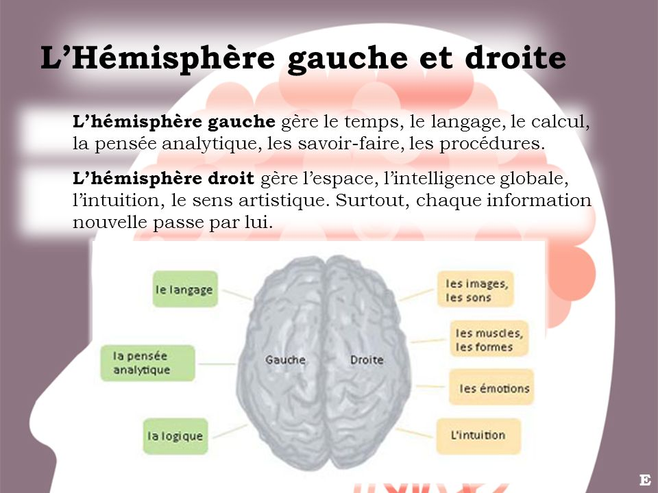 LHémisphère gauche et droite Lhémisphère droit gère lespace, lintelligence globale, lintuition, le sens artistique. Surtout, chaque information nouvel