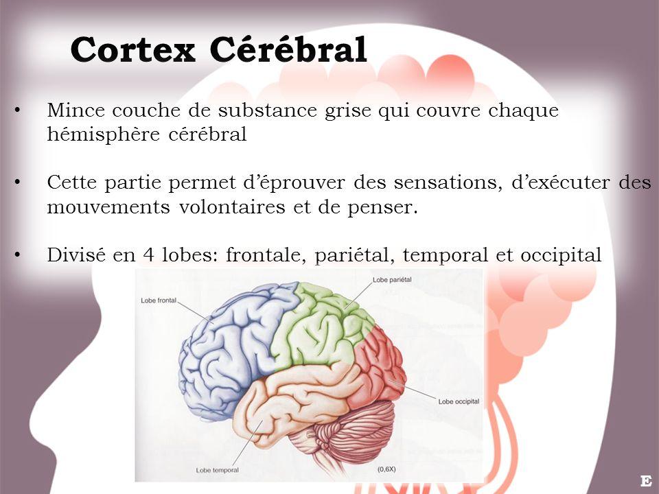 Cortex Cérébral Mince couche de substance grise qui couvre chaque hémisphère cérébral Cette partie permet déprouver des sensations, dexécuter des mouv