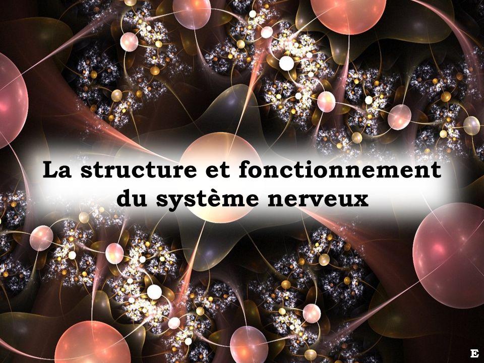 La structure et fonctionnement du système nerveux E