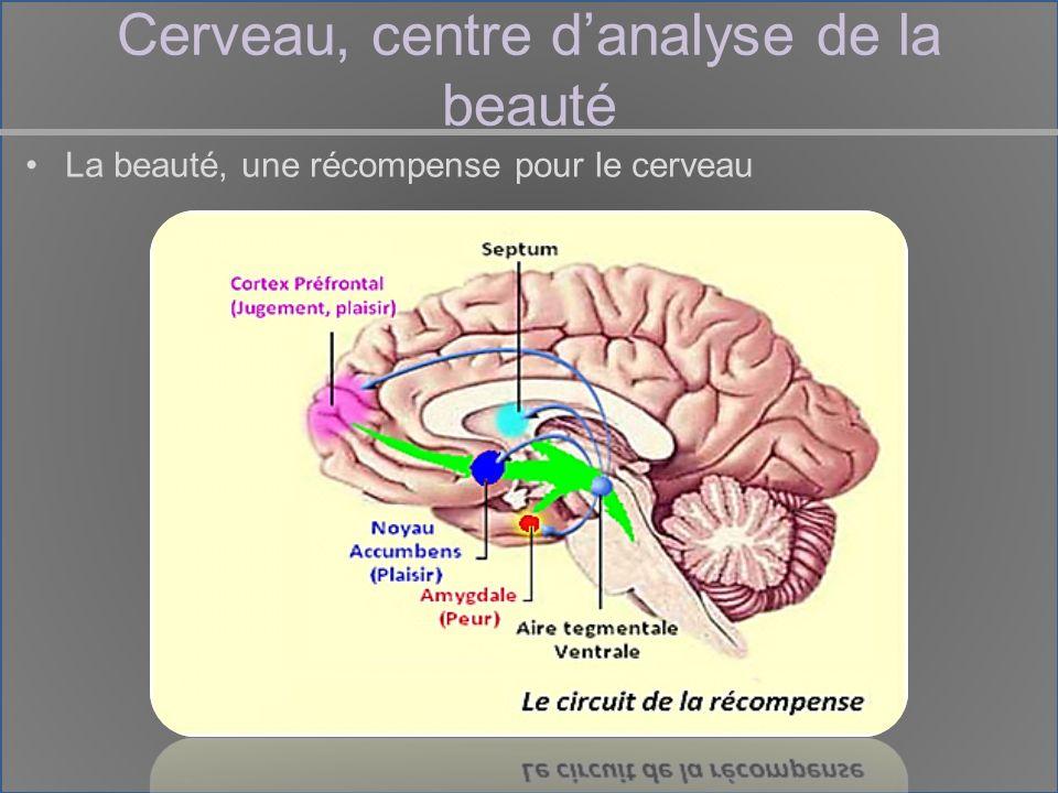 Cerveau, centre danalyse de la beauté La beauté, une récompense pour le cerveau