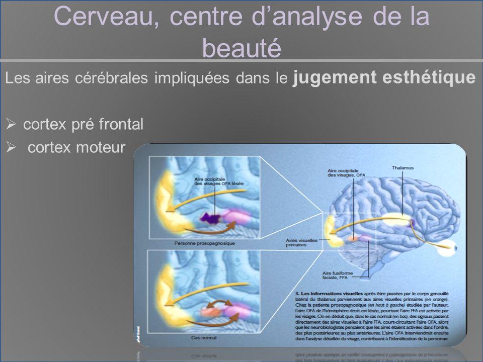 Cerveau, centre danalyse de la beauté Les aires cérébrales impliquées dans le jugement esthétique cortex pré frontal cortex moteur
