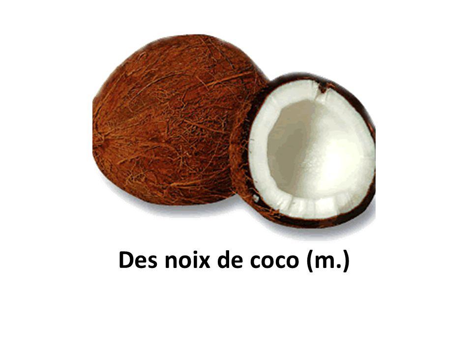 Des noix de coco (m.)