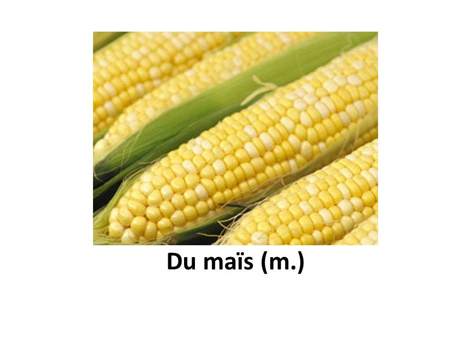 Du maïs (m.)