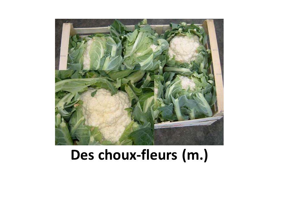 Des choux-fleurs (m.)