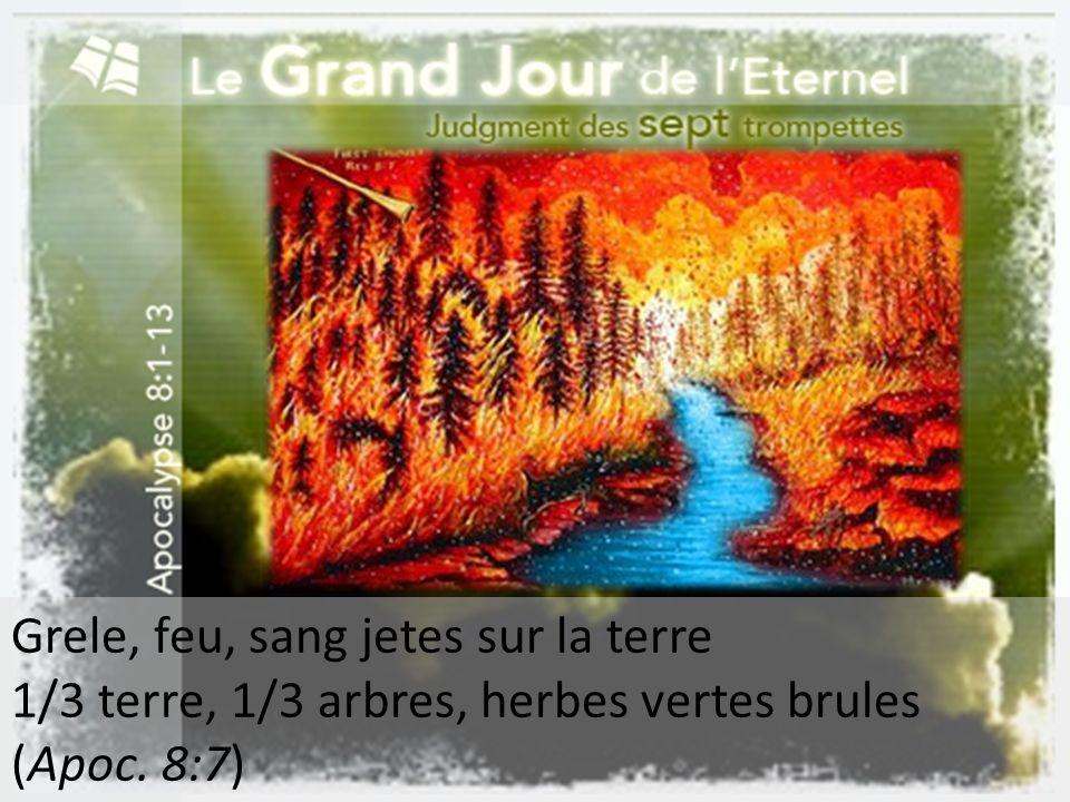 Grele, feu, sang jetes sur la terre 1/3 terre, 1/3 arbres, herbes vertes brules (Apoc. 8:7)