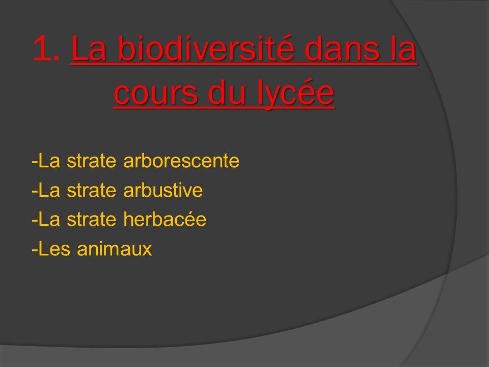 La biodiversité dans la cours du lycée 1. La biodiversité dans la cours du lycée -La strate arborescente -La strate arbustive -La strate herbacée -Les