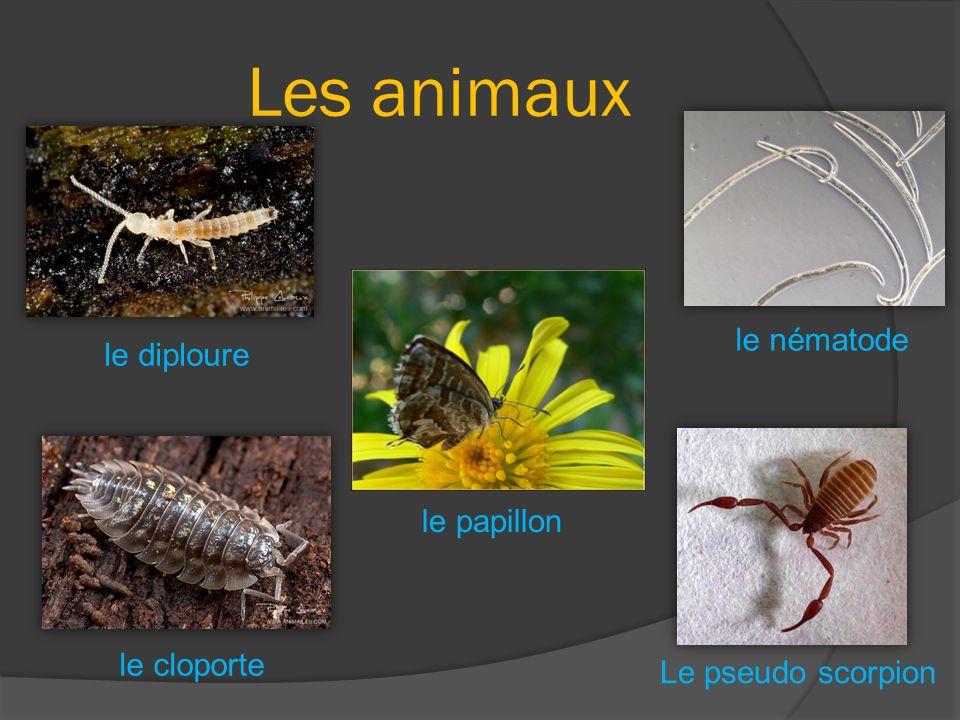 Les animaux le cloporte le papillon Le pseudo scorpion le nématode le diploure