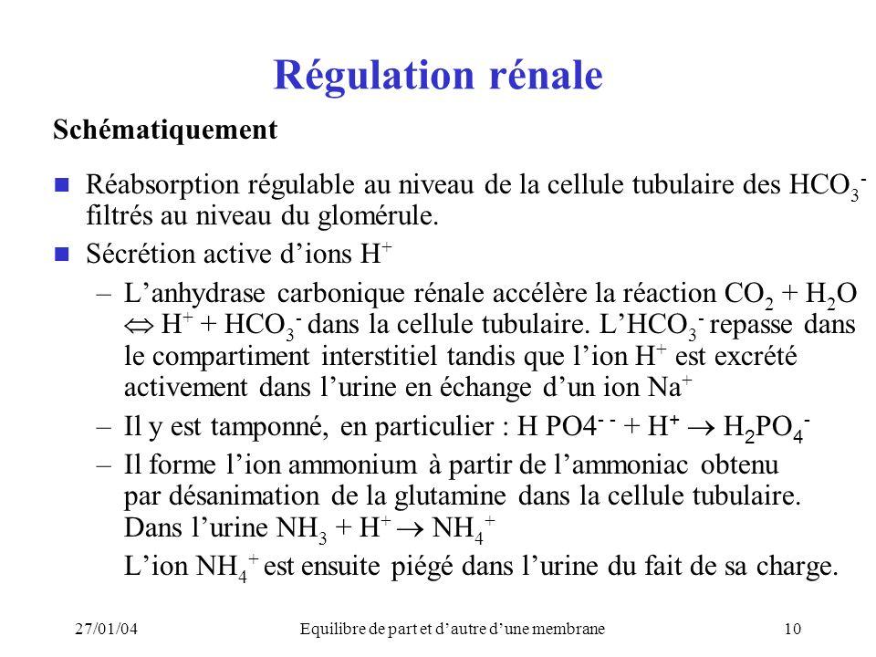 27/01/04Equilibre de part et dautre dune membrane10 Régulation rénale Schématiquement Réabsorption régulable au niveau de la cellule tubulaire des HCO 3 - filtrés au niveau du glomérule.