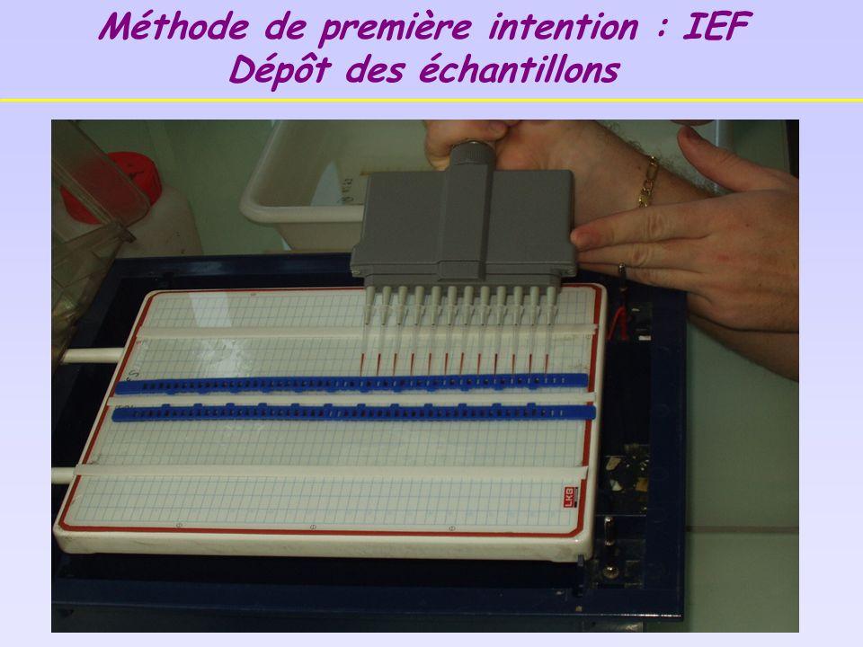 Méthode de première intention : IEF Dépôt des échantillons