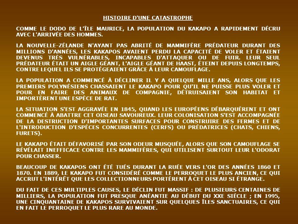 ESPÈCE MENACÉE, LE KAKAPO FIGURE SUR LA LISTE DES ESPÈCES DE L ANNEXE I DU CITES (CONVENTION SUR LE COMMERCE INTERNATIONAL DES ESPÈCES DE FAUNE ET DE FLORE SAUVAGES MENACÉES D EXTINCTION, DITE DE WASHINGTON) ET FAIT L OBJET D UN PLAN DE SAUVEGARDE DE LA PART DU DÉPARTEMENT DE CONSERVATION NÉO-ZÉLANDAIS.