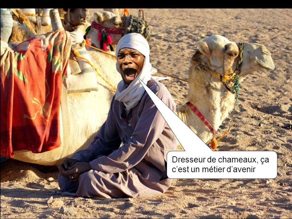 Dresseur de chameaux, ça cest un métier davenir