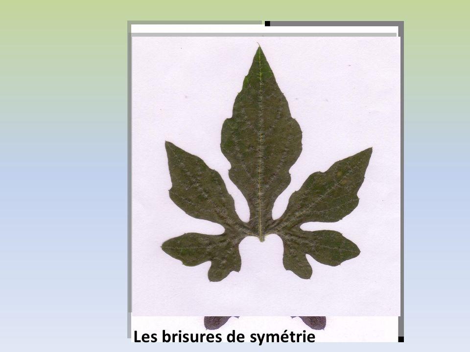 Les brisures de symétrie