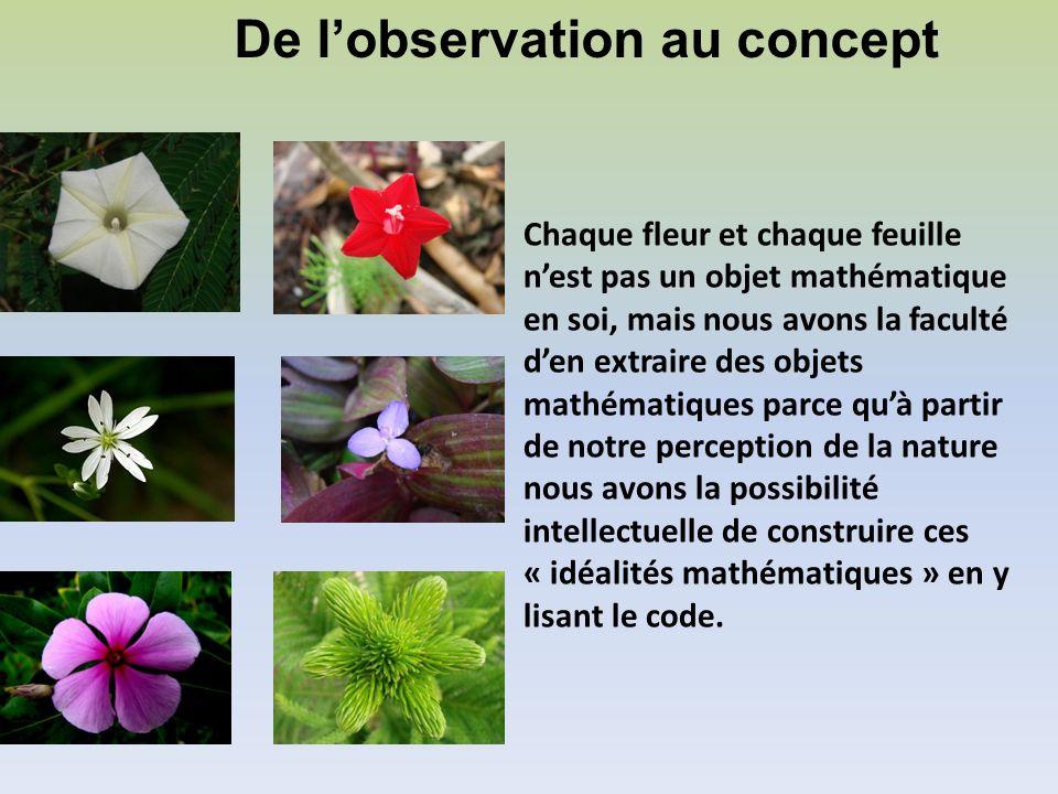 Chaque fleur et chaque feuille nest pas un objet mathématique en soi, mais nous avons la faculté den extraire des objets mathématiques parce quà parti
