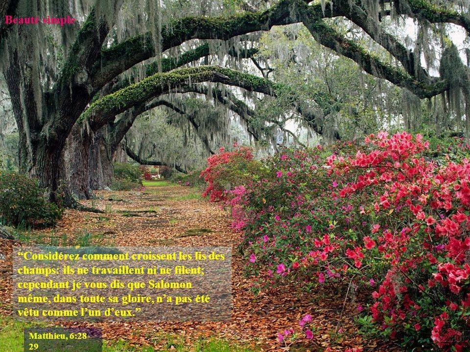Suivant le point de vue La beauté nest pas une qualité intrinsèque des choses.