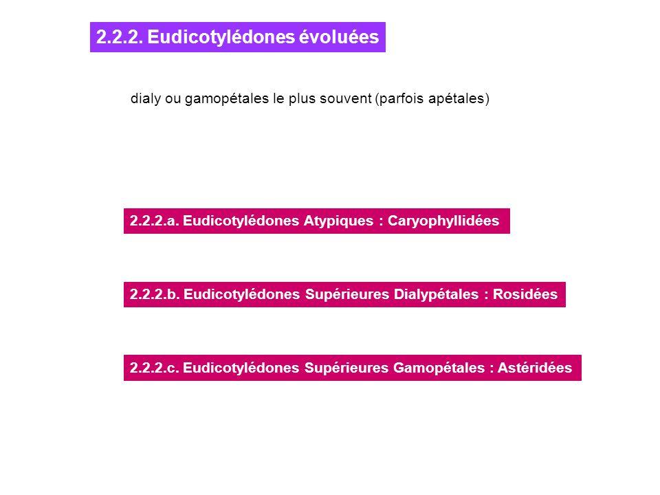 2.2.2. Eudicotylédones évoluées dialy ou gamopétales le plus souvent (parfois apétales) 2.2.2.a. Eudicotylédones Atypiques : Caryophyllidées 2.2.2.b.