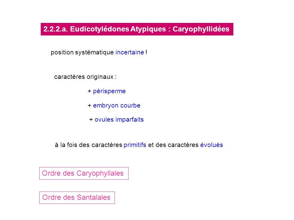 Ordre des Caryophyllales Ordre des Santalales 2.2.2.a. Eudicotylédones Atypiques : Caryophyllidées position systématique incertaine ! caractères origi