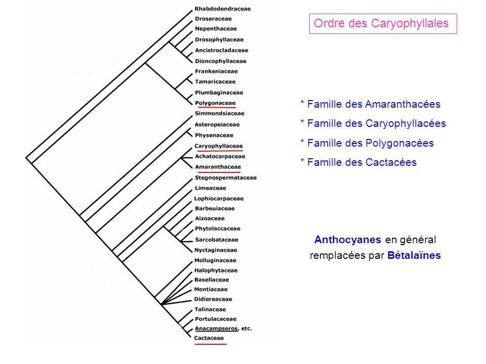 Ordre des Caryophyllales * Famille des Amaranthacées * Famille des Caryophyllacées * Famille des Polygonacées * Famille des Cactacées Anthocyanes en général remplacées par Bétalaïnes