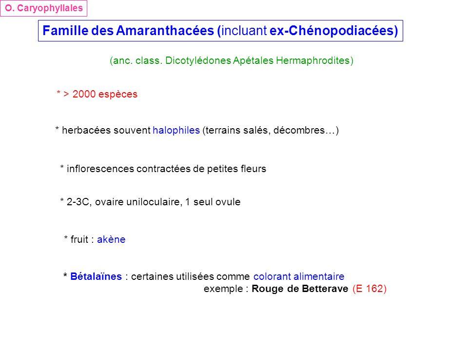 Famille des Amaranthacées (incluant ex-Chénopodiacées) (anc. class. Dicotylédones Apétales Hermaphrodites) O. Caryophyllales * > 2000 espèces * herbac