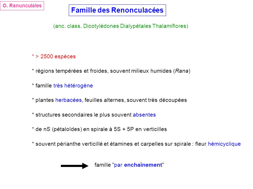 Famille des Renonculacées * > 2500 espèces * régions tempérées et froides, souvent milieux humides (Rana) * plantes herbacées, feuilles alternes, souv