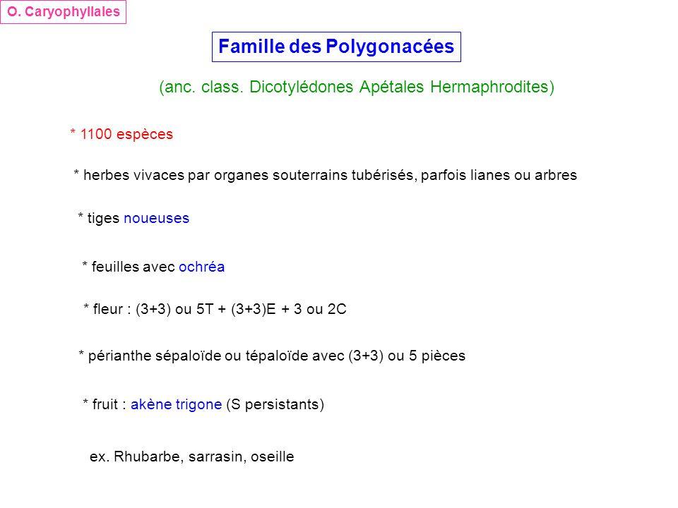 Famille des Polygonacées (anc. class. Dicotylédones Apétales Hermaphrodites) O. Caryophyllales * 1100 espèces * herbes vivaces par organes souterrains