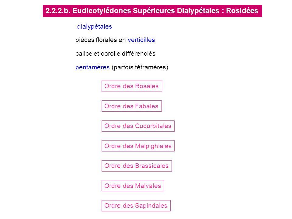 2.2.2.b. Eudicotylédones Supérieures Dialypétales : Rosidées Ordre des Rosales Ordre des Cucurbitales Ordre des Fabales Ordre des Malpighiales Ordre d